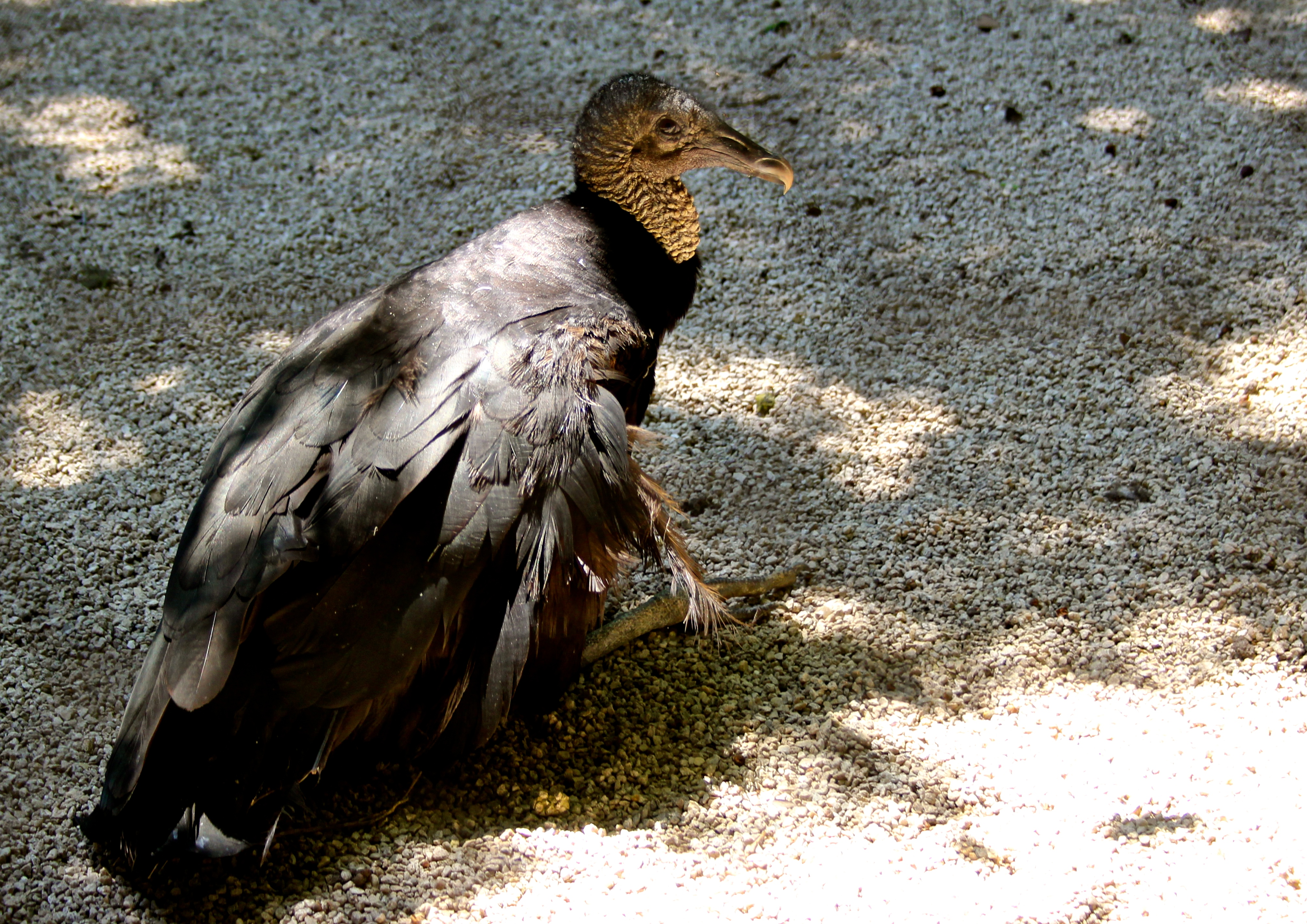 Hawk Walk and Eagle Expressway in Flamingo Gardens - Uncover Travel